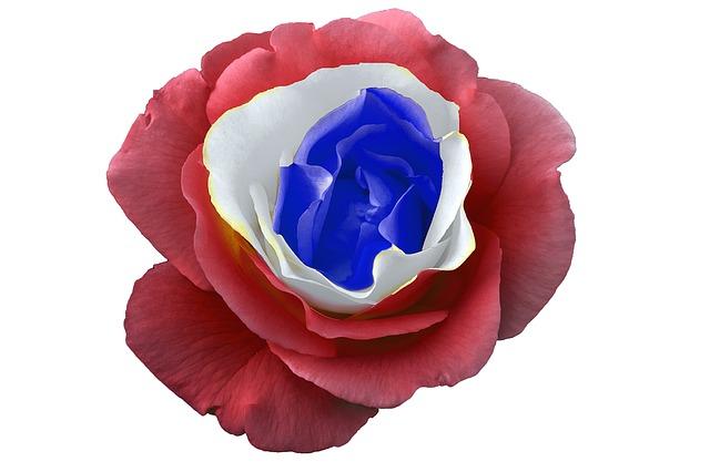 Trikolora v růži.jpg