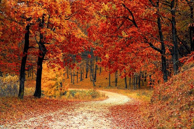 příroda, stromy.jpg